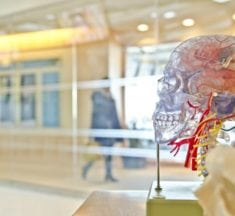 How the brain prevents you from revealing your potential