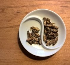 Why Insects Should Be in Your Diet